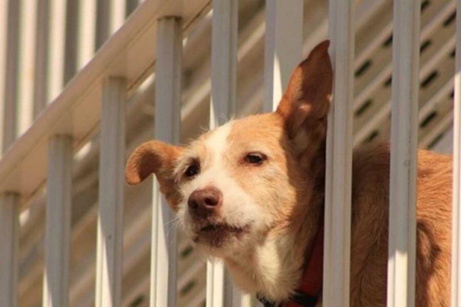 cane sotto il sole