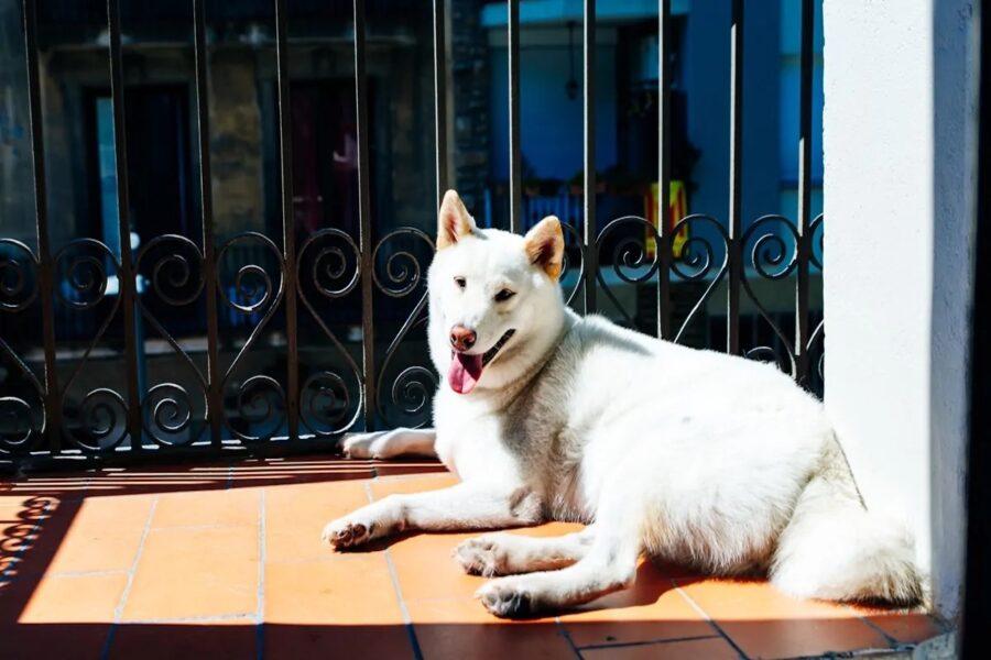cane sotto il sole in balcone