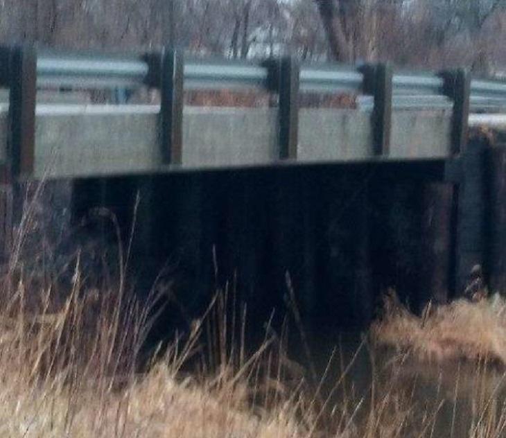 Cane abbandonato sotto un ponte con del nastro avvolto sul muso