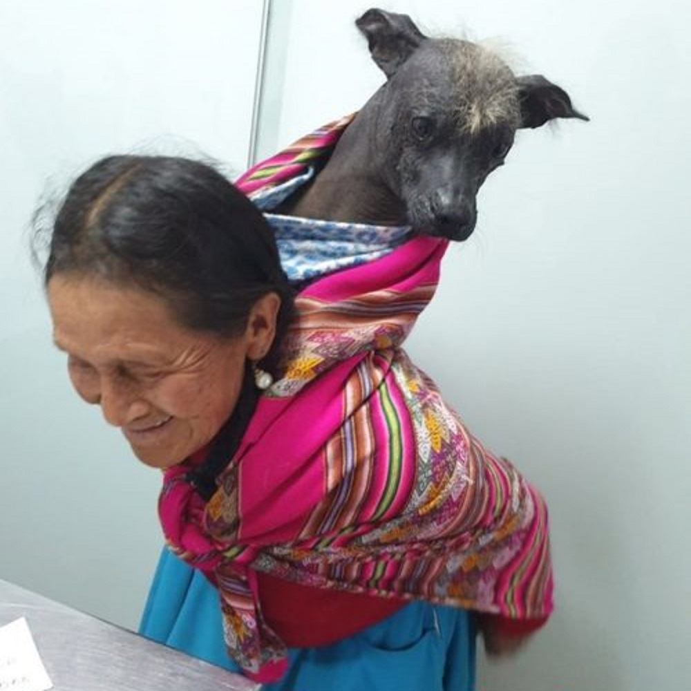 Resultado de imagem para veterinaria mujer