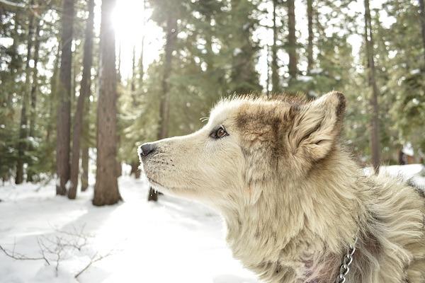 la neve e il nuovo ambiente di caccia