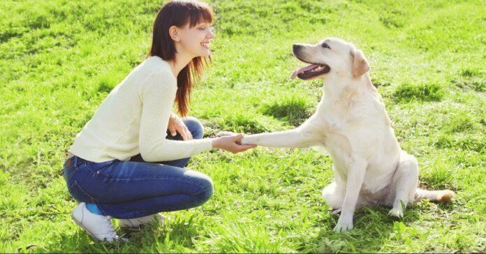 il cane vuole fare pace, evidenza