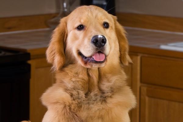 Pappa al salmone per cane e padrone: da leccarsi i baffi