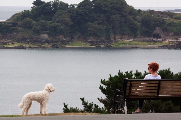 Perché il cane annusa gli estranei (e tira per avvicinarsi a loro)?