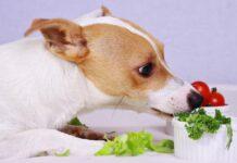 cane mangia mangia l'insalata