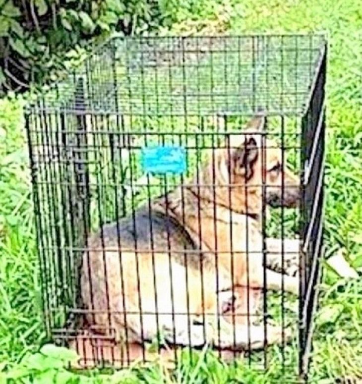 Cane abbandonato sotto il sole cocente dentro una gabbia in ferro