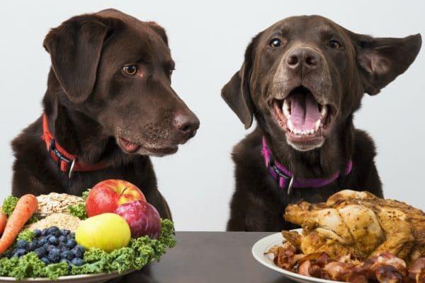Perché i cani attaccano quando mangiano?