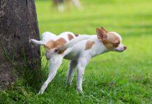 cane che fa pipì su albero