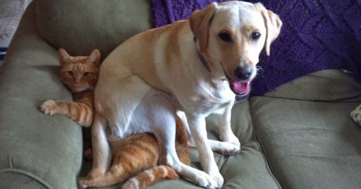 cane con un gatto