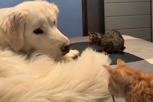 Perché i cani si siedono sui gatti (e sulle loro teste)?