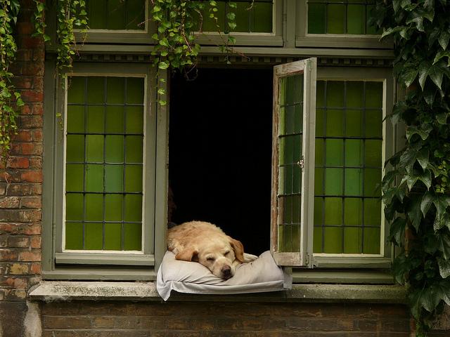 perché i cani stanno alla finestra, otivi