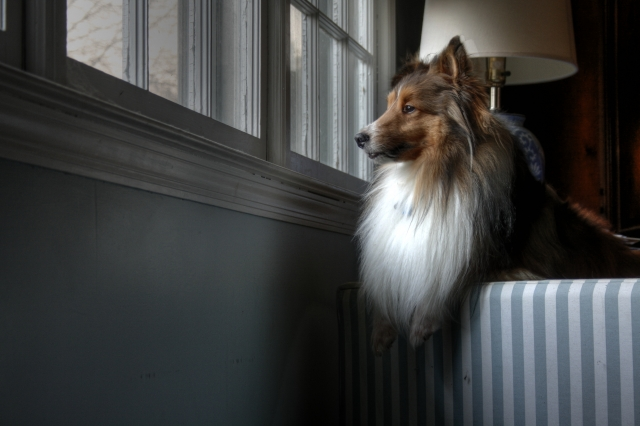 perché il cane abbaia quando suona il campanello?
