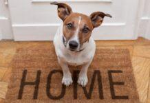 Perché il cane abbaia quando suona il campanello? scopriamolo