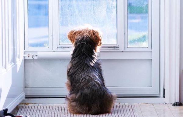 perché il cane abbaia quando suona il campanello? scopriamolo insieme