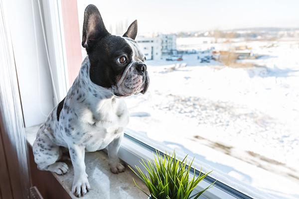 Cane assorto che guarda fuori dalla finestra