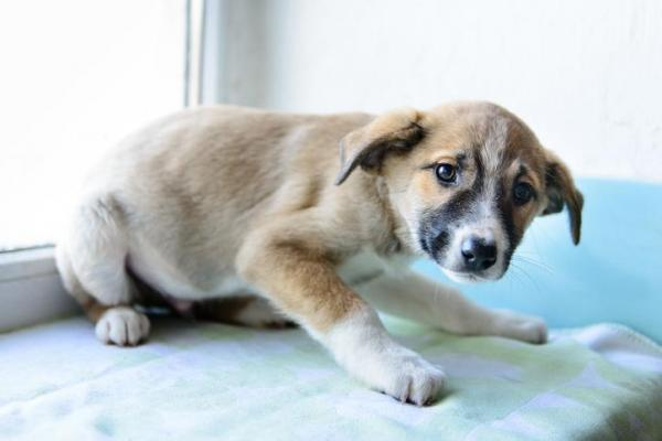 Il cane vuole fare pace dopo un rimprovero: come capirlo