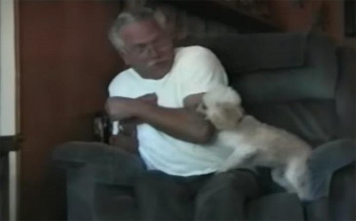 La reazione del cane quando viene accusato di aver le pulci è straordinaria