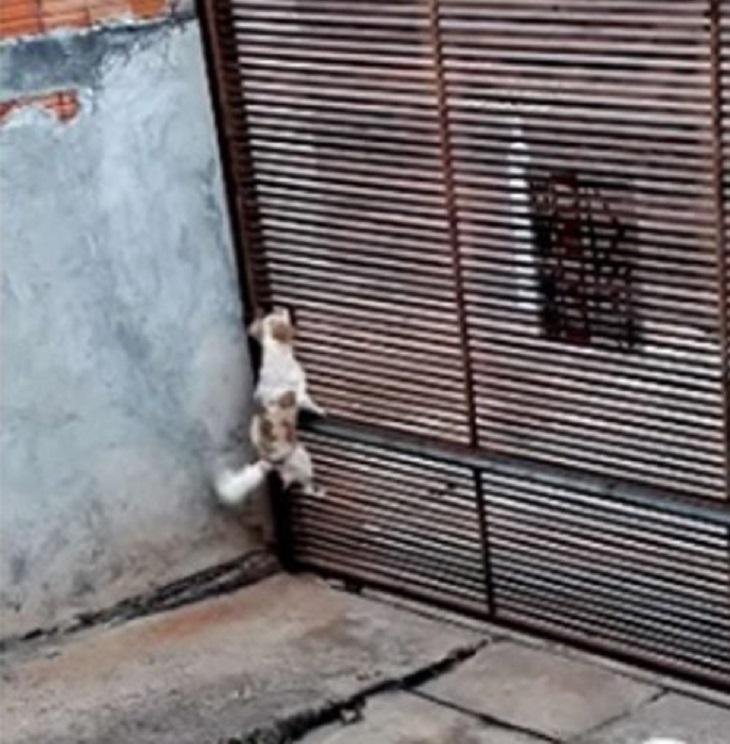 Cane riesce a fuggire da una minuscola fessura di un cancello