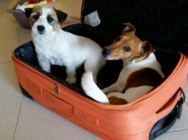 Come preparare il cane al distacco