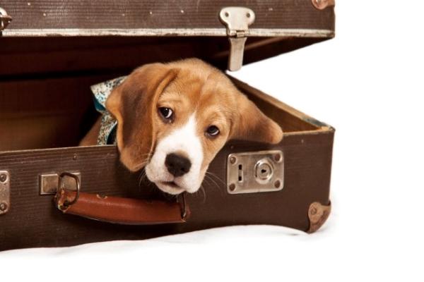 Preparare il cane al distacco prima di un viaggio: ecco come