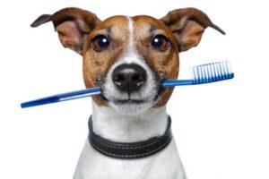 Il cane ha mangiato il bicarbonato di sodio, cosa si deve fare?