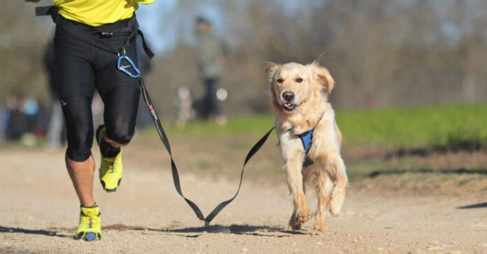 maratona del cane