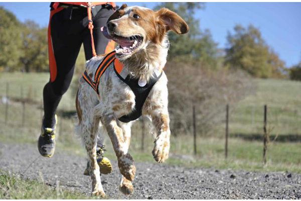 5 ragioni per correre con il cane ed essere felici in due