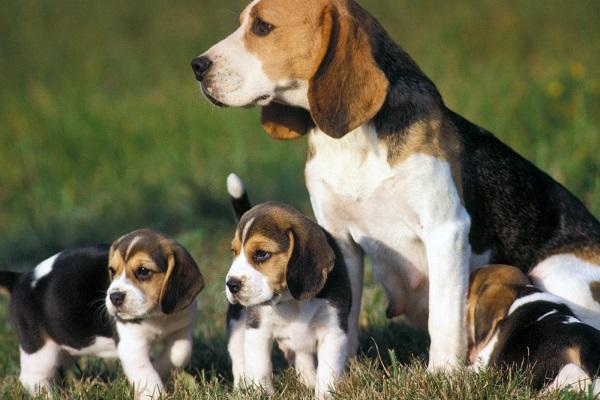 mamma con cuccioli di cane