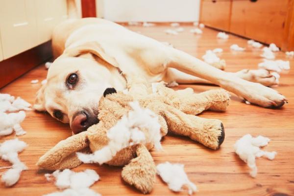 cane che distrugge