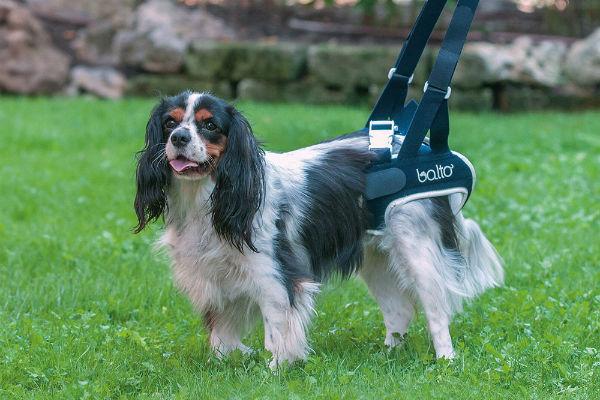 Riabilitazione ortopedica del cane: tutto ciò che c'è da sapere