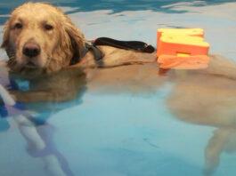 cane che nuota
