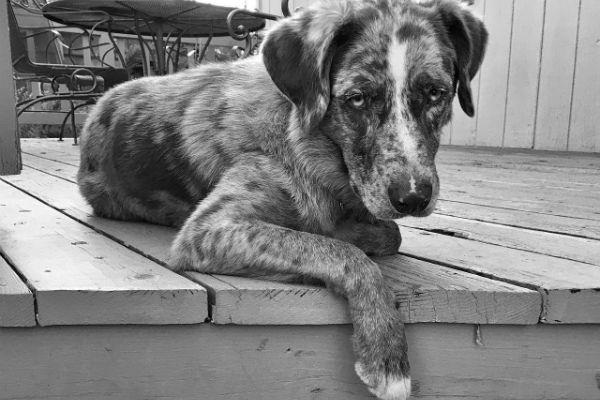 Ghiandola salivare del cane gonfia: cosa bisogna fare