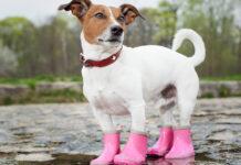 Scarpe per cani