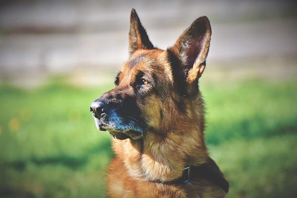 Segnali del cane sotto stress: ecco come te lo dice