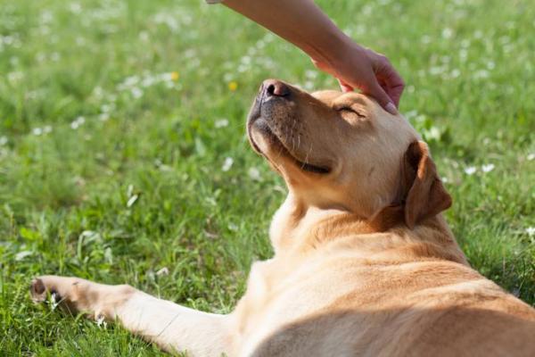 Segnali di sottomissione del cane: i più comuni