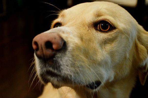 Tagliare i baffi al cane: si può fare oppure no?