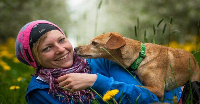 Perché il cane annusa gli estranei e non te