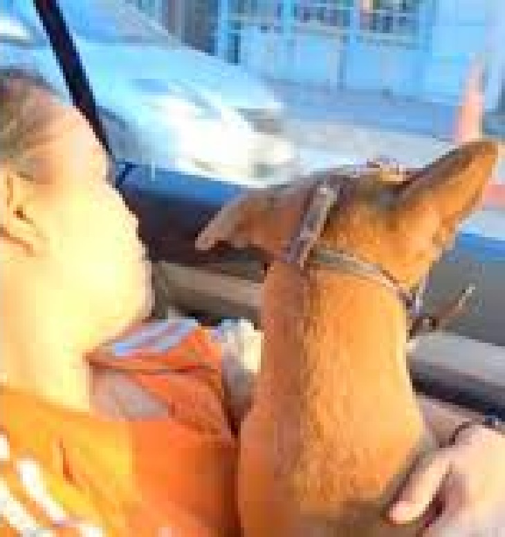 Cane aspetta sul molo il ritorno del proprietario che ha perso la vita in mare