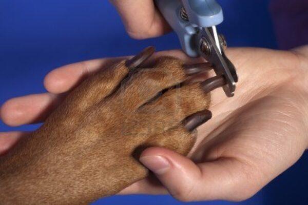 toccare le zampe del cane è un gesto d'affetto