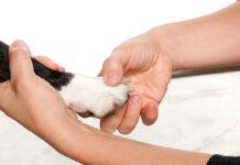Toccare le zampe del cane è un gesto d'affetto o no