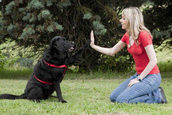 toccare le zampe del cane è un gesto di affetto o no