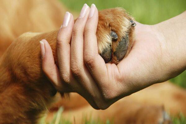 toccare le zampe del cane è un gesto d'affetto oppure no