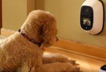 cane fa videochiamata