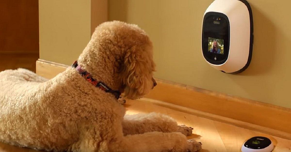 cani riconoscono il volto su uno schermo