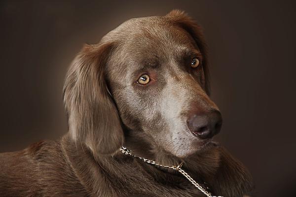Sguardo del cane: tutte le cose che Fido può comunicarci