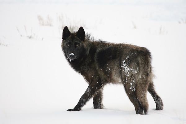 Ad alcuni cani la neve non piace