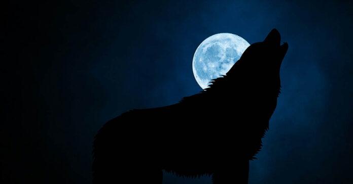 I cani abbaiano di più di notte? E perché lo fanno?