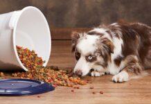 Cibo e semi di lino per cani