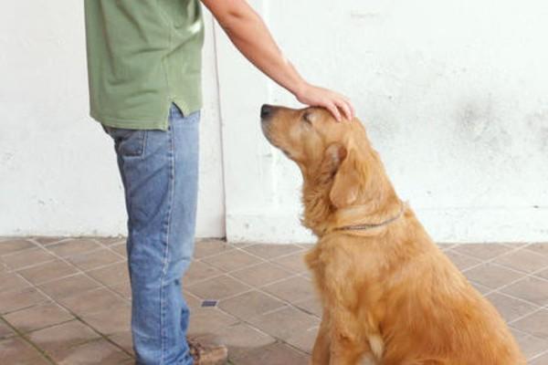 Addestramento del cane con fischietto