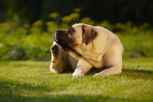 Antiparassitari per cani: come funzionano nello specifico?